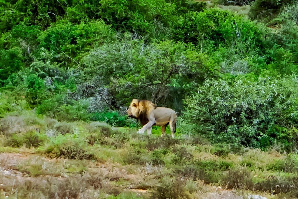 Kruger Park 4 day Safari (overnight in the Park)