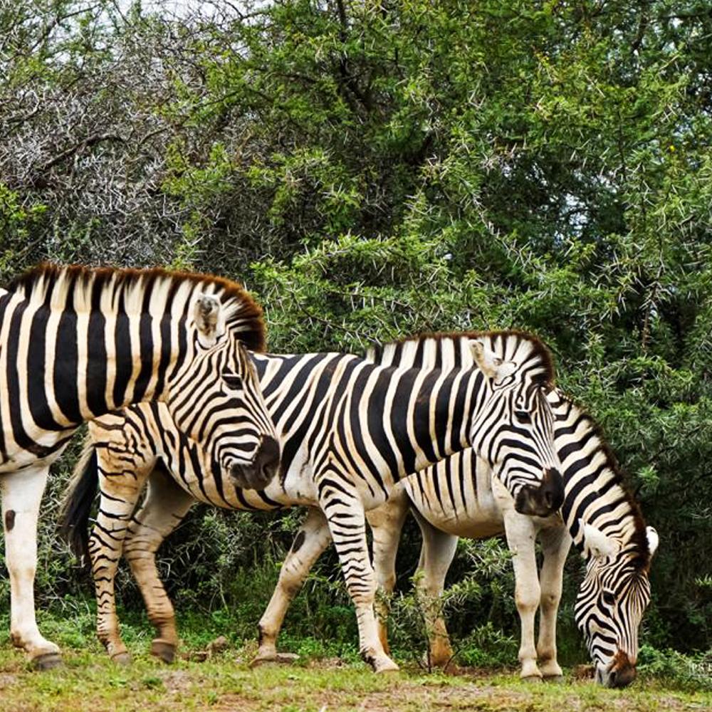 Kruger Park 4 day Safari