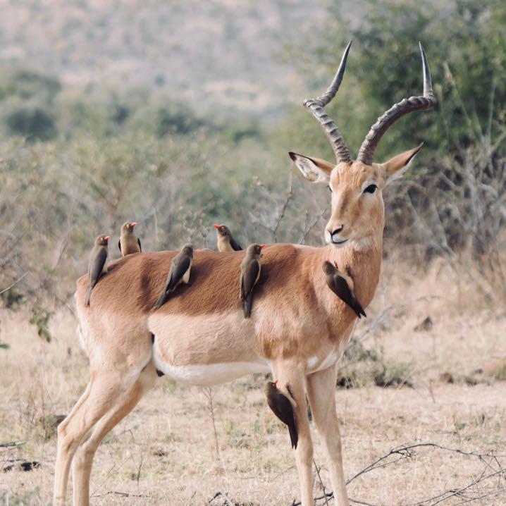 Pilanesberg National Park – 2 Night Luxury Safari