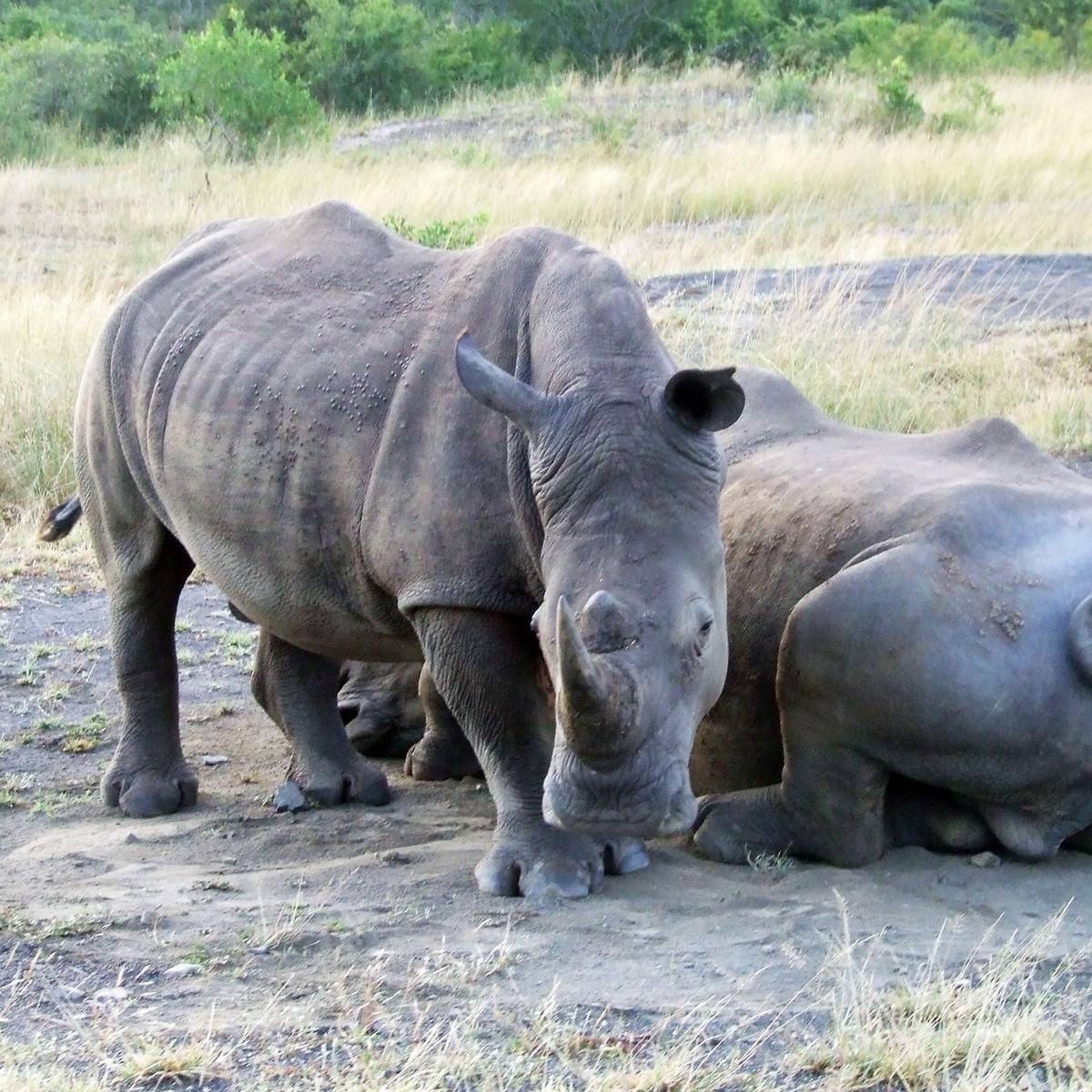 Kruger fly-in Safari Tour